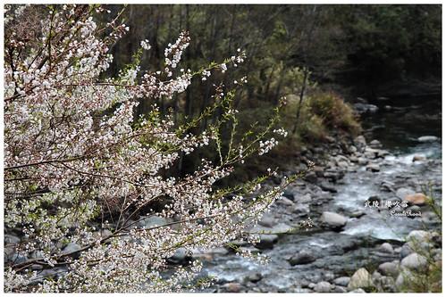2011-03-04 陽明武陵 350 r