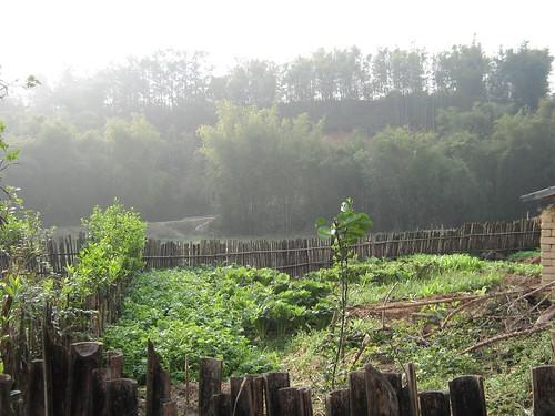 竹林聚集的地方就是上学的路口