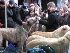 2011_March_CelticFest 059