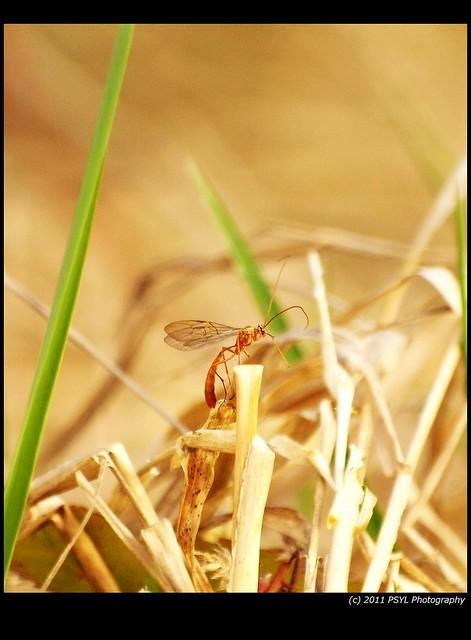 Unidentified Wasp