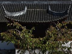 Roof (Ian@NZFlickr) Tags: garden chinese nz dunedin aotearoa philosophers