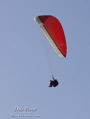 IMG_308_Paraglider_201103
