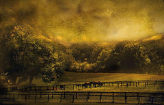 """""""Wild wild horses couldn't drag me away."""".......... (jcmphoto1) Tags: selectbestexcellence sbfmasterpiece"""