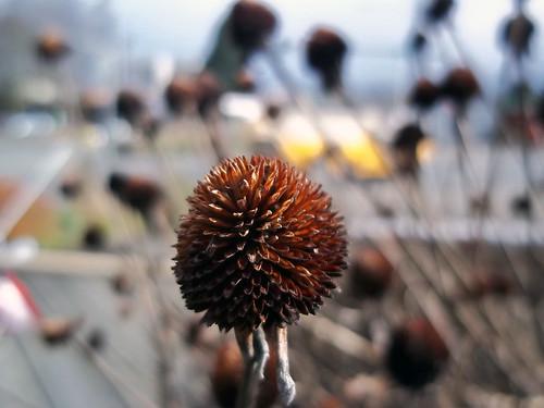 Dry Cone