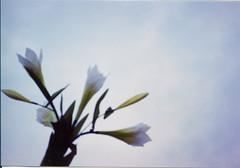 Scenery_1008_050