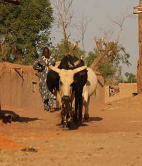 West Africa-4780