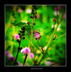 bee and flowers #2 [explored] (e.nhan) Tags: flowers light flower art nature landscape spring colorful colours dof bokeh arts bee backlighting enhan