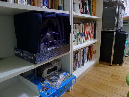一尺小鳥龍放置在書架
