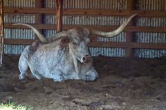 IMG_3664.jpg (taharaja) Tags: ranch house texas bend fort farm houston images richmond historic sugar land hdr goerge goergehistoricranchhoustonphotowalktexas