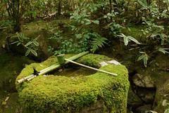 La vasque de pierre et la mousse (Pingouin  roulettes) Tags: japan geotagged asie japon jpn kyto honsh kyt kitanotenmangshrine sanctuairekitanotenmang