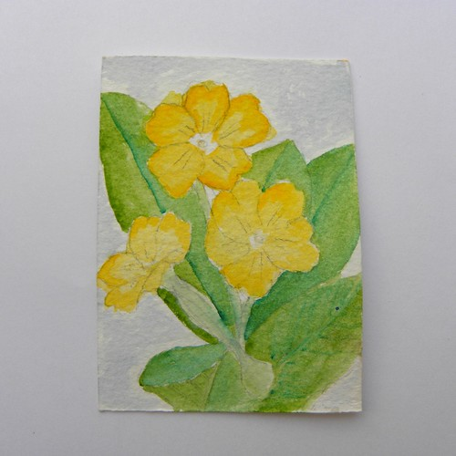 Primrose ATC in watercolour