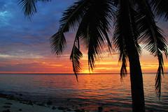 New dawn of hope (m o d e) Tags: ocean new travel light summer vacation sky sun love nature colors silhouette clouds sunrise island dawn interestingness interesting shoot shot image lagoon palm explore destination environment maldives mode mashafeeg