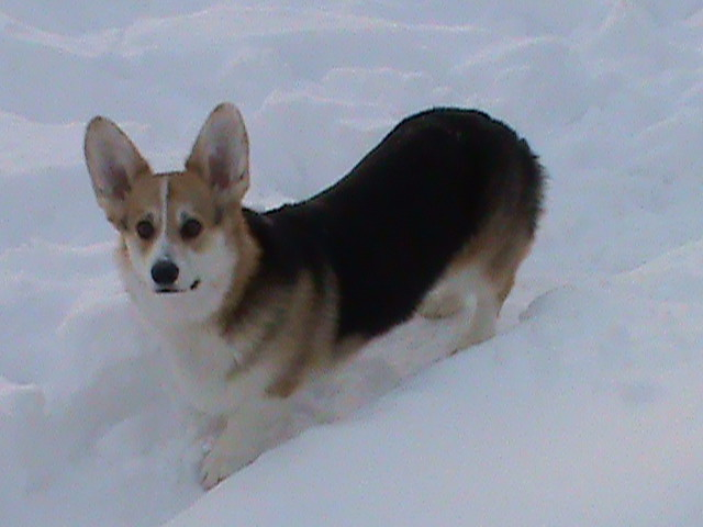 Bryn in snow 1/2011