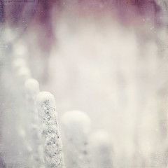Mini-Frosted Fence Posts! (pixelmama) Tags: texture fence dof shallow montroseharbor hpt gettyimages chicagoillinois ttt totallytexturetuesday veralim happypurpletuesday