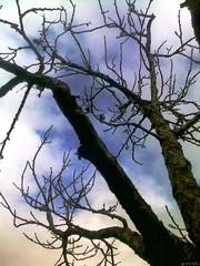 Abricotier مشمش (Jamal Elkhalladi) Tags: nature hiver milli المغرب hassi طبيعة شتاء بركان abricotier ميلي حاسي triffa تريفة مشمش أشجار
