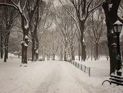 Central Park, Winter, New York City 151 (Vivienne Gucwa) Tags: city nyc newyorkcity winter urban snow ny newyork cityscape centralpark manhattan ues urbanexploration gothamist snowfall lowermanhattan curbed uppereastside winterwonderland snowscape winterscape urbanphotography uppermanhattan wnyc centralparksnow snownyc winternyc centralparkwinter cityphotography winternewyorkcity snowstormnyc snowstormnewyorkcity