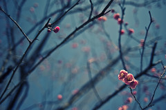 momo (konafoto) Tags: tree japan tokyo nikon bokeh 28mm minimal fullframe fx simple ume  koubai d700 flickraward nikond700 nikon700 flickraward5 flickrawardgallery konafoto