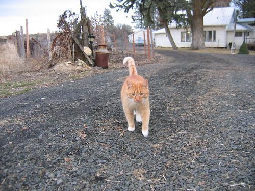 Barn Cat Stalker