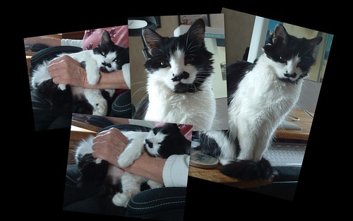 little black and white cat photo collage