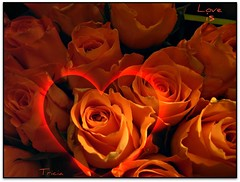 A heart on fire (Patricia Speck) Tags: light shadow orange rose landscape petals heart peach valentine flame tricia patricia speck loveis aheartonfire