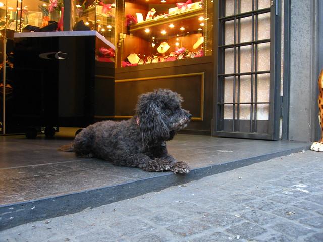 イヌのフリー写真素材