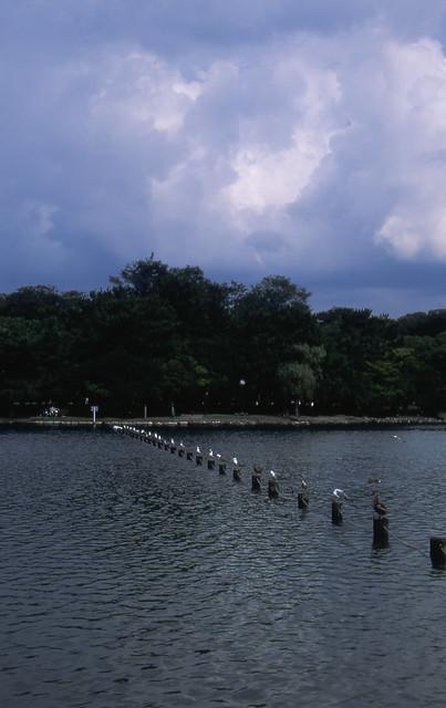 一列に並んだ鳥のフリー写真素材