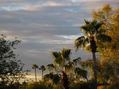 Warm Light (zoniedude1) Tags: light sunset arizona sky sunlight southwest color nature phoenix beauty weather skyline clouds evening december view sundown palmtrees mybackyard skyshow rooftopview valleyofthesun decembersunset rooftopphotography onmyroofagain zoniedude1 rooftopphoto canonpowershotg11