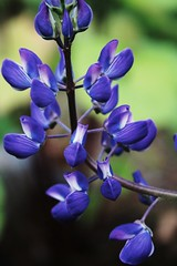 Natural Beauty (Janety Matsutake) Tags: flower nature up contrast close vivid