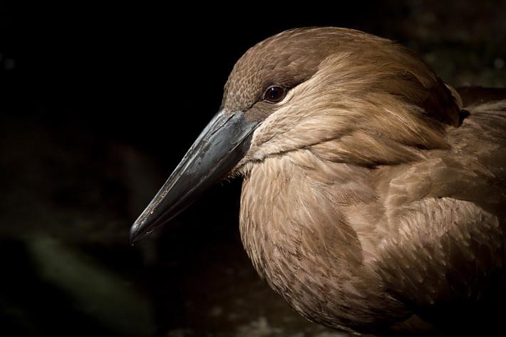 020611_zoo_bird04