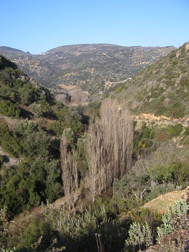 Ribera del Víboras