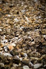 Bassin d'Arcachon (SebastienToulouse) Tags: ocean mer eau sable voiture seb bateau maison plage phare oiseau eglise sandrine canard mouette arcachon tracteur bassin oie atlantique bouee