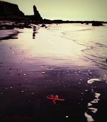 Left behind (Jaana-Marja) Tags: sea mountains beach water reflections iceland waves starfish fjord hvalfjrur vanagram coppercloudsilvernsun