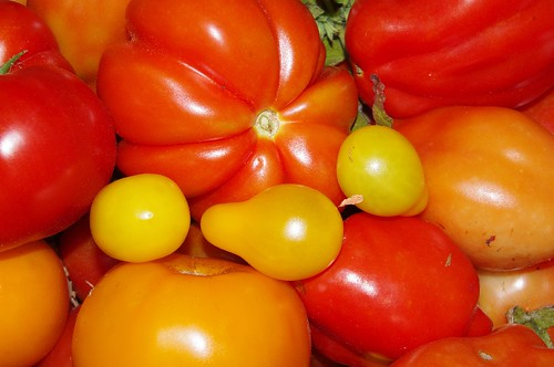 Post image for Grow Great Tomatoes Without Using Chemicals