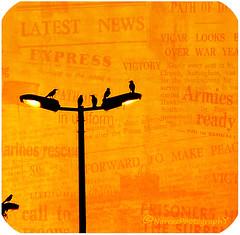 Gossip   :/ (Nareez) Tags: orange bird texture birds silhouette canon photo newspaper journal aves eltono uccelli jeddah tone oiseau oiseaux pjaro gossip uccello chismes ku gossips  giornale fotoraf sesi portakal   kular  elperidico lafoto nareez potins pettegolezzi leton dedikodu larancio ragots   decolornaranja latextura