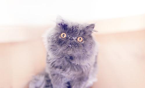 [フリー画像] 動物, 哺乳類, ネコ科, 猫・ネコ, 201103041100