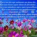 QUE ESSA QUINTA FLOWER SEJA ESPECIAL PARA TODAS AS AMIGAS!!!!!