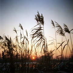 Sunset (Sartori Simone) Tags: italien sunset sky italy sun snow ice geotagged lomo europa europe frost italia tramonto brina cielo lubitel2 lubitel neve sole italie ghiaccio veneto allrightsreserved fitodepurazione saccisica codevigo simonesartori oasinaturaledicadimezzo 2
