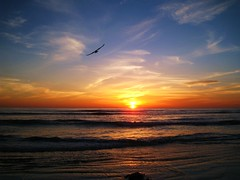 Soaring (Annie is back) Tags: california sunset sky sun water tag3 taggedout clouds tag2 tramonto tag1 pacificocean encinitas sanelijobeach