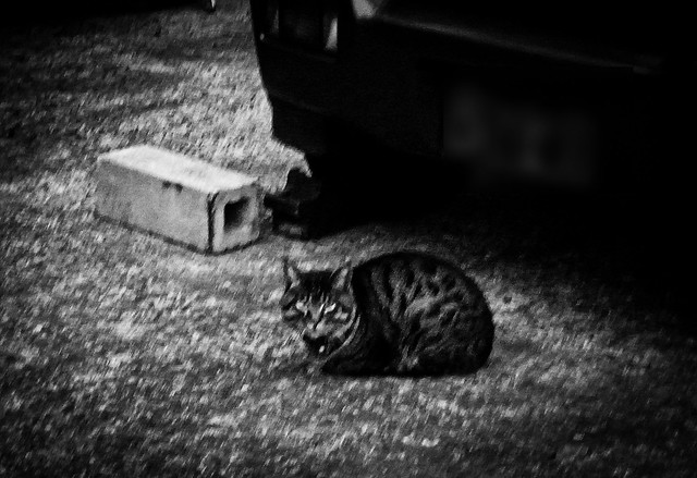 Today's Cat@2011-03-10