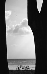 78.365 (Arun Titan) Tags: sunset sky cloud sun india reflection beach silhouette clouds sunrise canon landscape photography photo photos stones wideshot silhouettes deadtree cycle arun havelock andaman radhanagar portblair arunkumar radhanagarbeach arunr 1000d arun4884 aruntitan