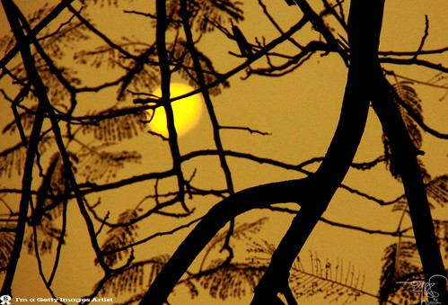 Moon Still  Lighting with  Moring sun @SYLHET by ** 5 9 5 0 3 6 **