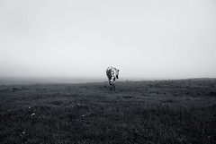 horse (subjectivexperience) Tags: uk morning horse animal fog countryside wildlife foggy meadow pony oxford mustang steed colt stallion racehorse equine workhorse filly foal foggymorning galloper gelding oxfordfoghorse