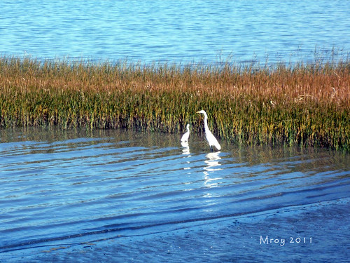 coastal cleanup 093
