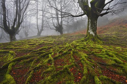 Ezinezko lurra by DavidCidrePhotography