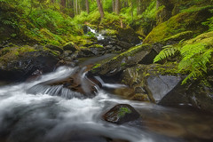 Sol Duc Valley - Olympic National Park - Washington (Luke Austin) Tags: usa blur water rain speed creek canon photography waterfall washington movement slowshutter polarizer olympicnationalpark tiltshift ndfilter 24mmtse lukeaustin solducvalley lukeaustinphotography