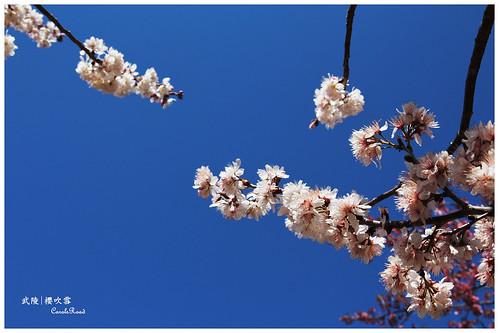 2011-03-04 陽明武陵 325 r