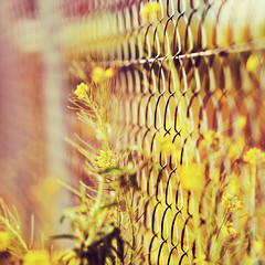 Nur getrumt. (www.juliadavilalampe.com) Tags: wild espaa colors yellow fence spain dof bokeh gelb getty gettyimages rejas hff malente 85mm18 chaulafanita fencefriday fencedfriday juliadavila juliadavilalampe