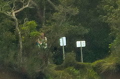 Surveillance (volcantrek8) Tags: abandoned trekking canon rainbow terraces cathedrals patrick spouse pole spire ridge helicopter bananas trail waterfalls valley catamaran wife napali puka nualolo islandinthesky bushwhack kalepa anaki awaawapuhi honopu starfishfungus vt8 openceilingcave honopuarch kauai2011march
