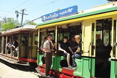 IMGP9439.jpg (Steve Guess) Tags: copyright museum oz anniversary sydney tram australia event nsw newsouthwales 50th sutherland trams tramway loftus royalnationalpark royalpark 2011 50years 26february steveguess helennixon