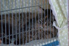 DSC_0137 (Francesco_Fontana) Tags: cat kat chat gato katze mace  macska gatto  con kot gat koka kedi kass katt kissa kttur maka kucing pusa mo   kat     pisic  qattus   kais